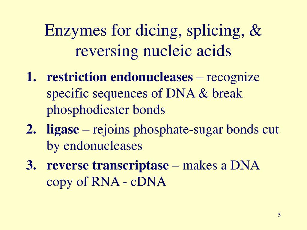 Enzymes for dicing, splicing, & reversing nucleic acids