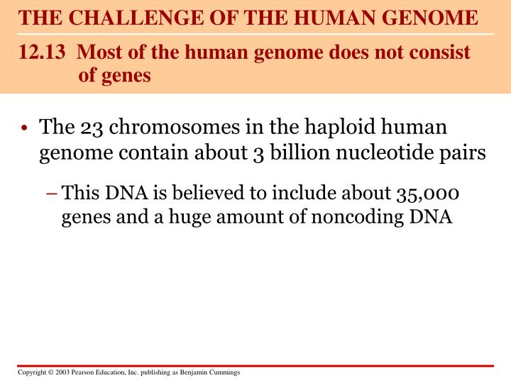 12 13 most of the human genome does not consist of genes
