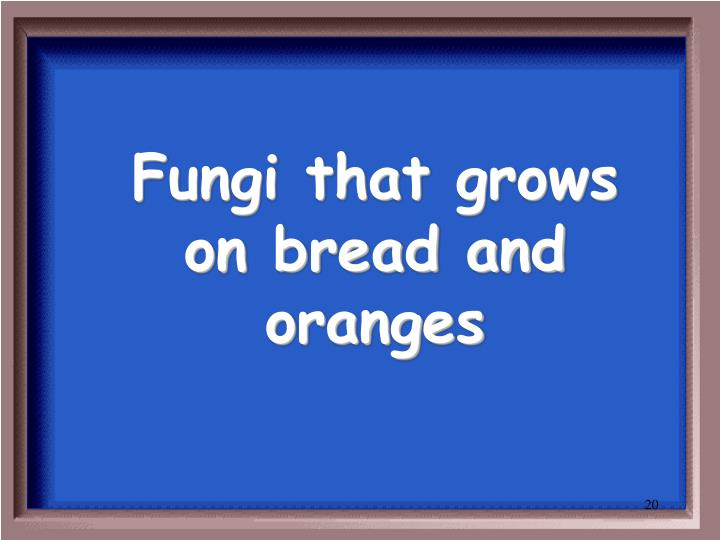 Fungi that grows on bread and oranges
