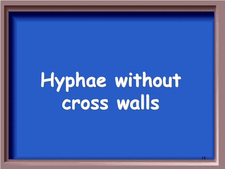 Hyphae without cross walls