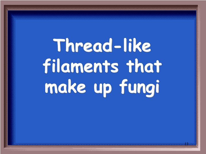Thread-like filaments that make up fungi