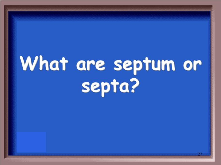 What are septum or septa?