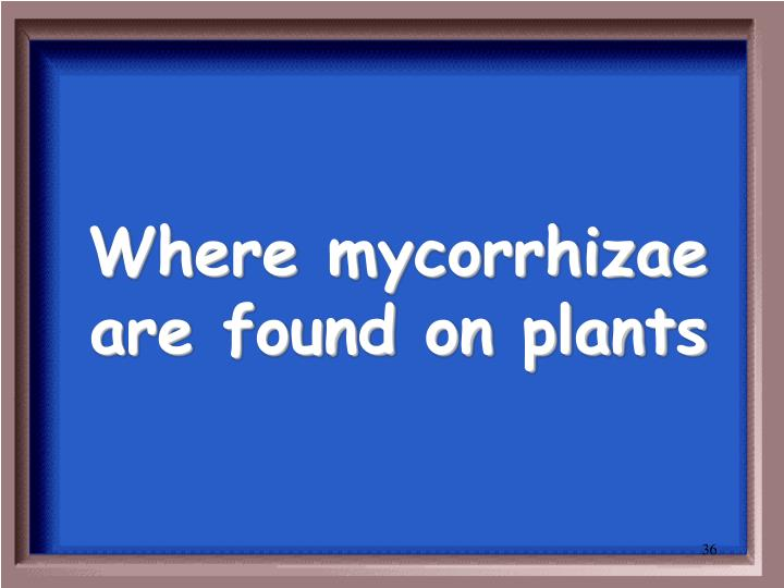 Where mycorrhizae are found on plants