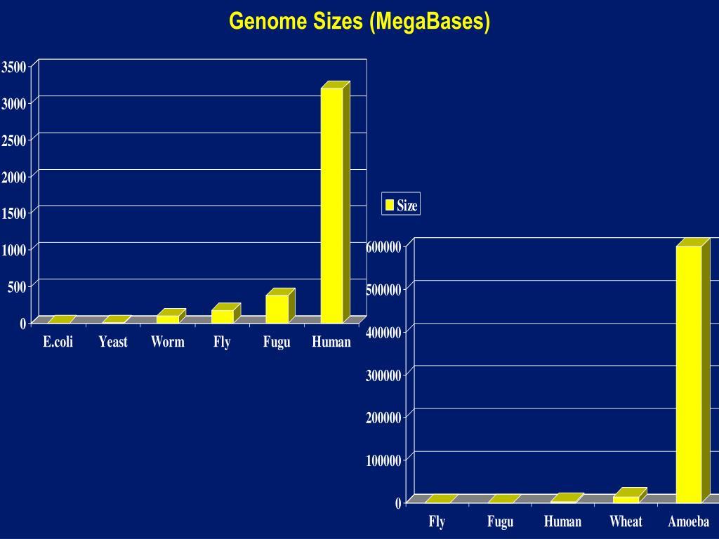 Genome Sizes (MegaBases)