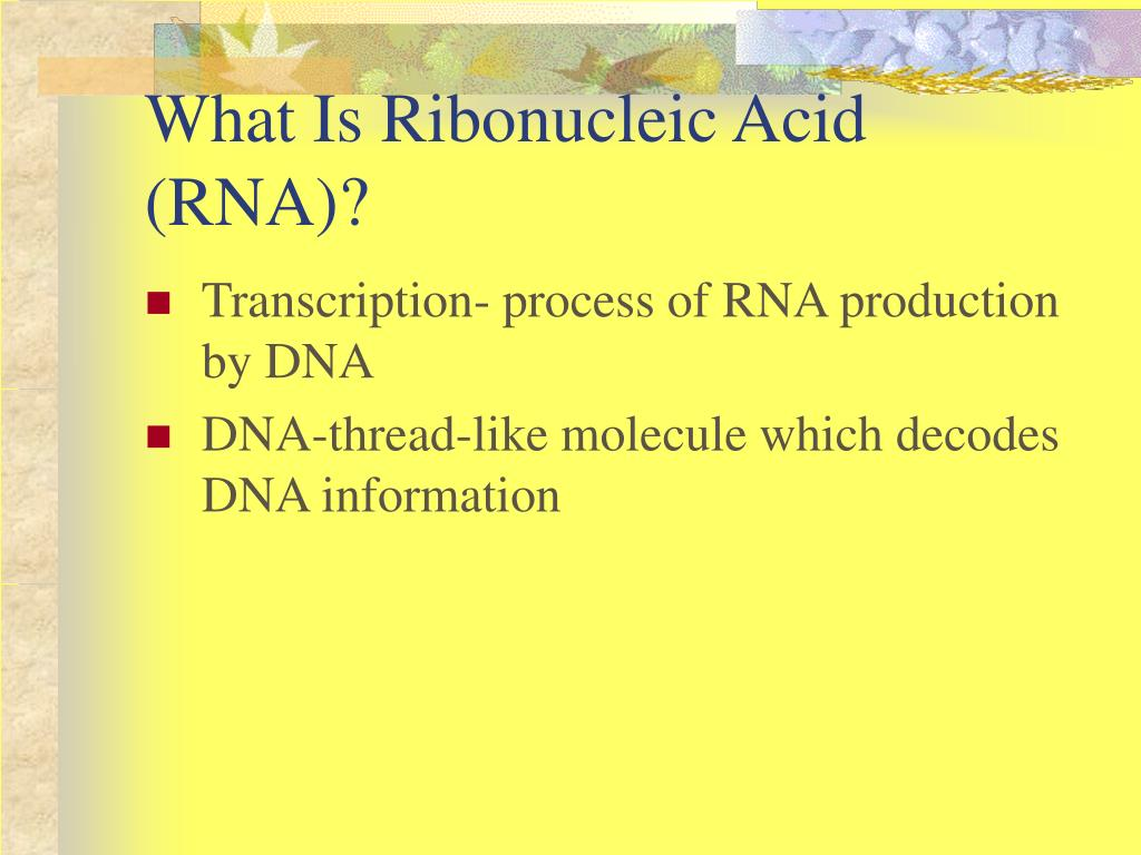 What Is Ribonucleic Acid (RNA)?