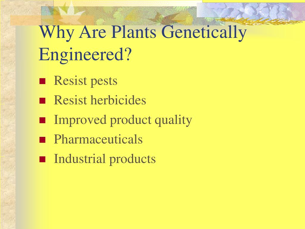 Why Are Plants Genetically Engineered?