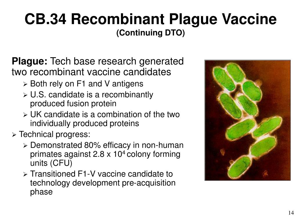 CB.34 Recombinant Plague Vaccine