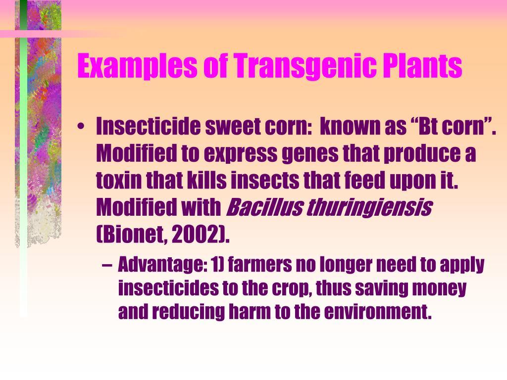 Examples of Transgenic Plants