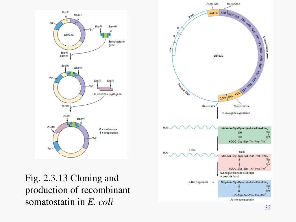 Fig. 2.3.13 Cloning and production of recombinant somatostatin in