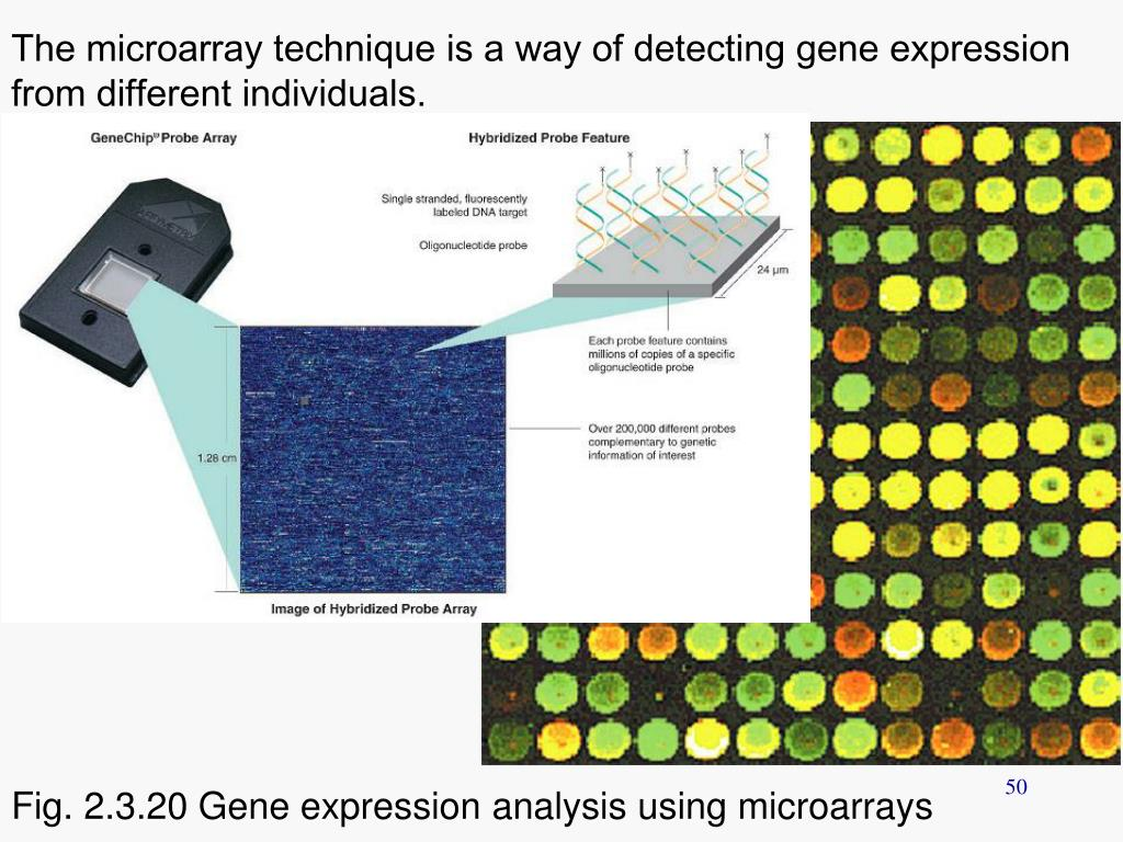 The microarray technique is a way of detecting gene expression from different individuals.