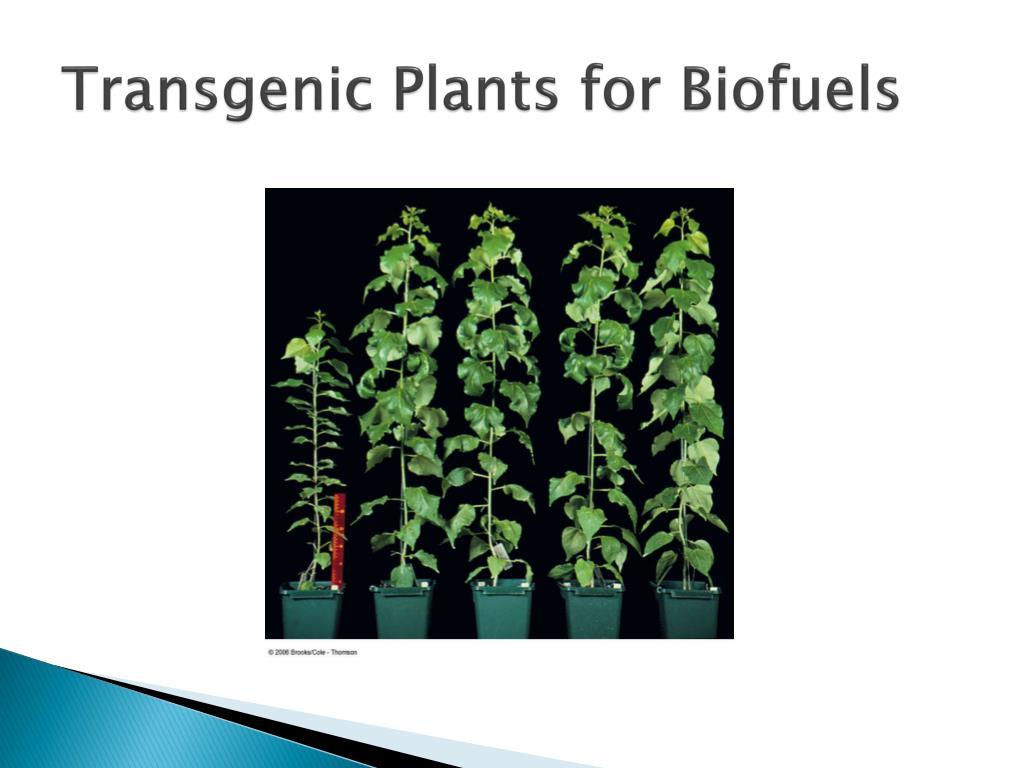 Transgenic Plants for