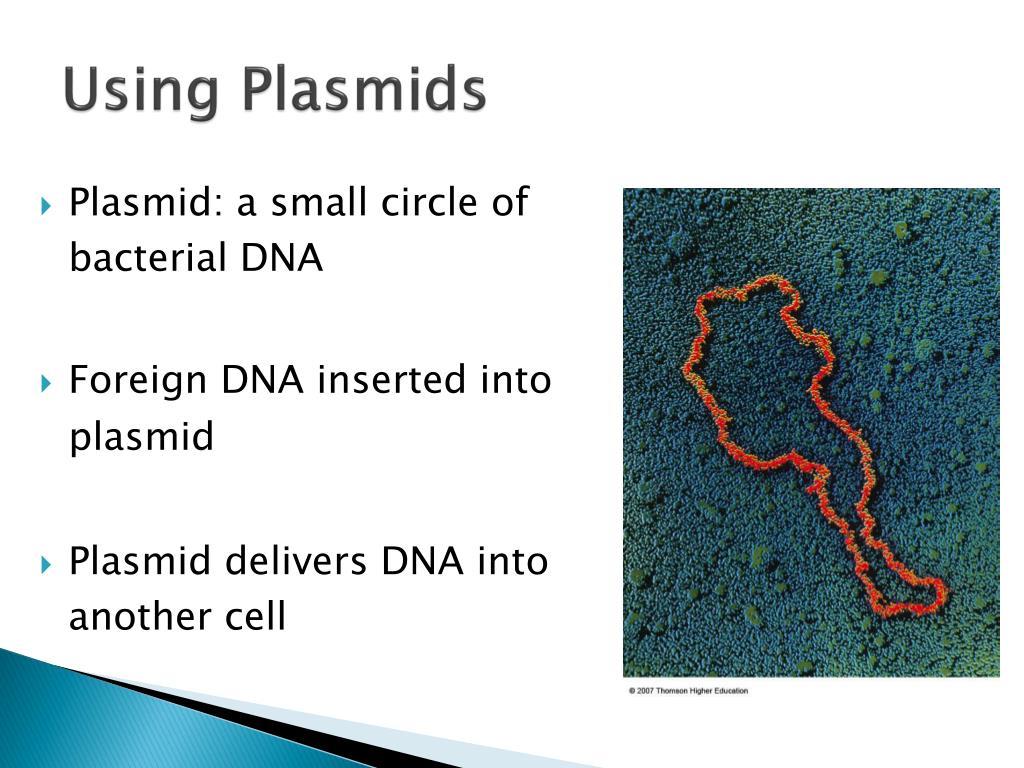 Using Plasmids