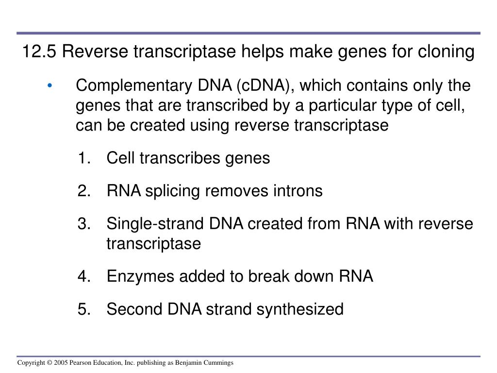 12.5 Reverse transcriptase helps make genes for cloning