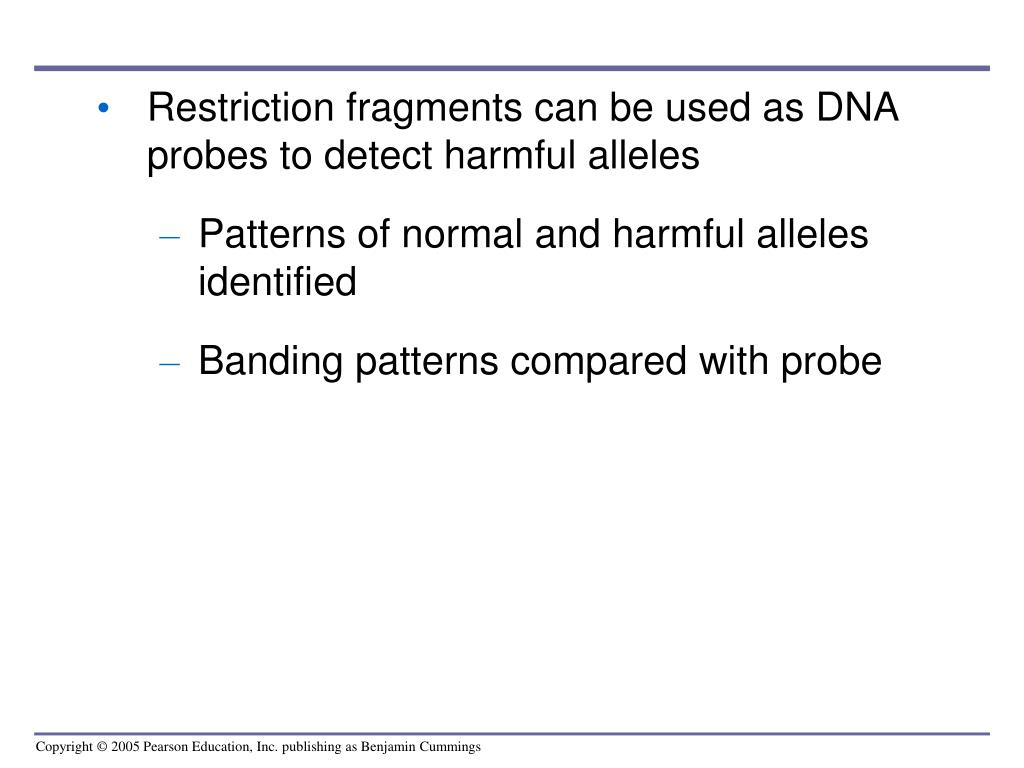 Restriction fragments can be used as DNA probes to detect harmful alleles