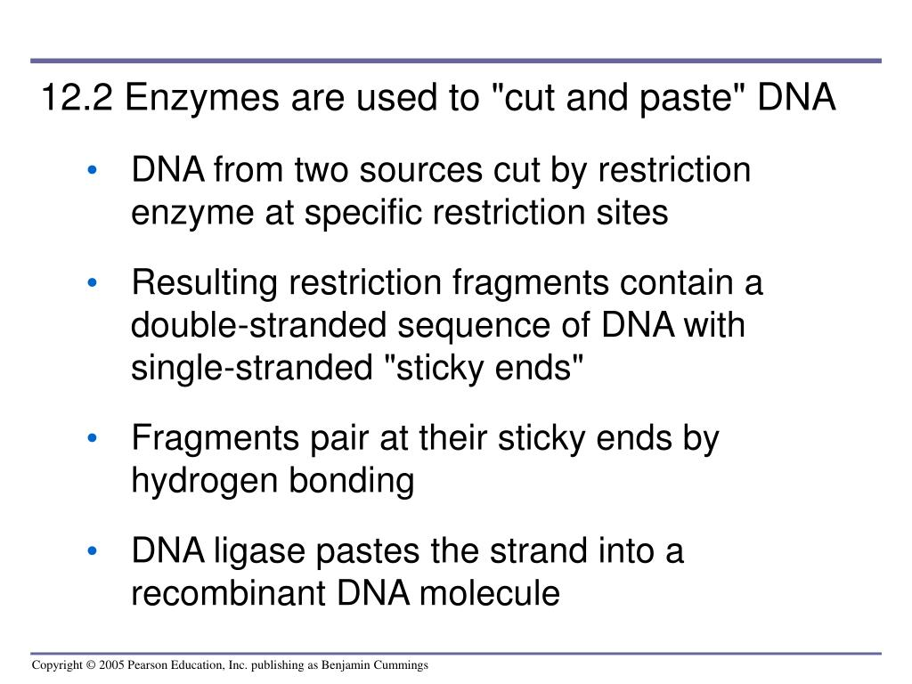 "12.2 Enzymes are used to ""cut and paste"" DNA"