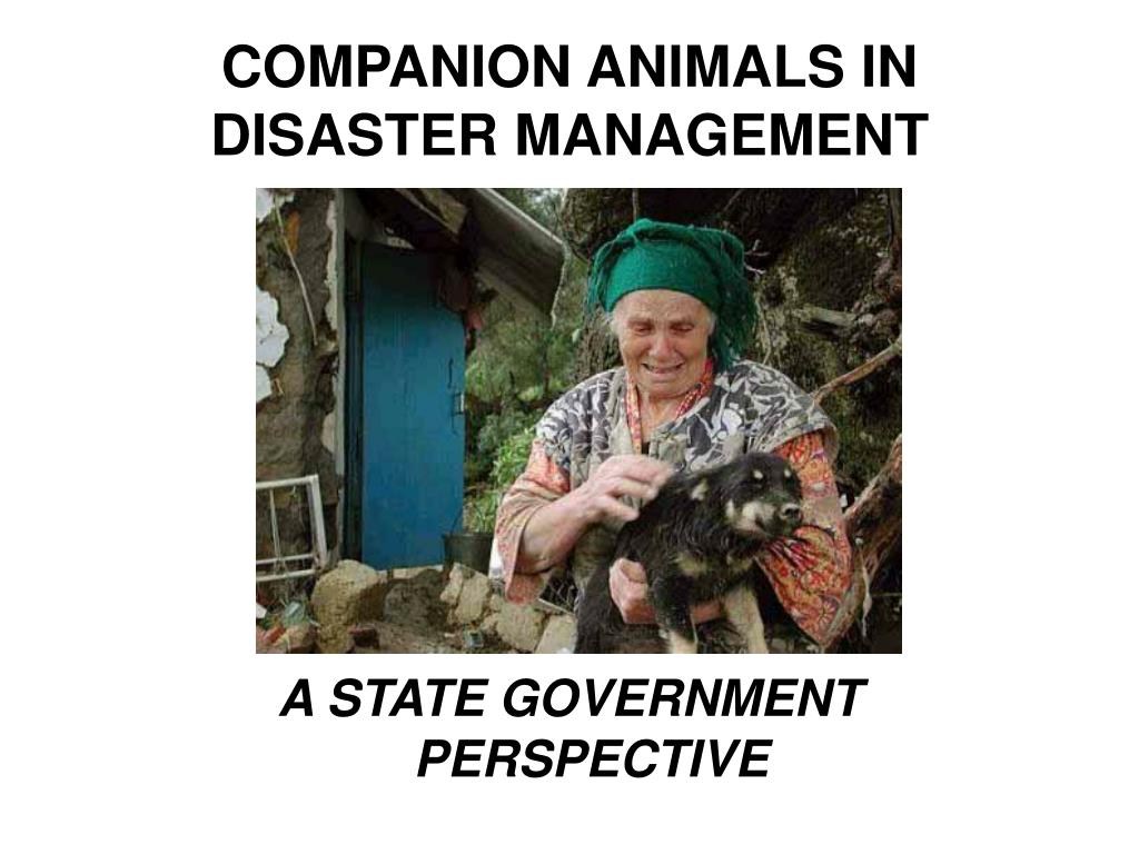 COMPANION ANIMALS IN DISASTER MANAGEMENT