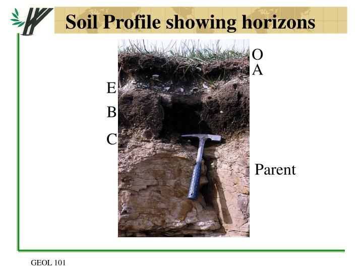 Soil Profile showing horizons