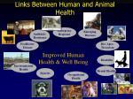 links between human and animal health