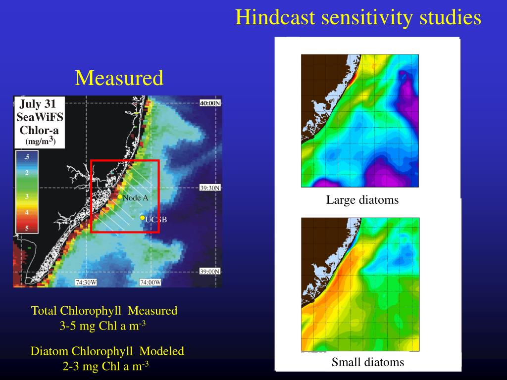 Hindcast sensitivity studies