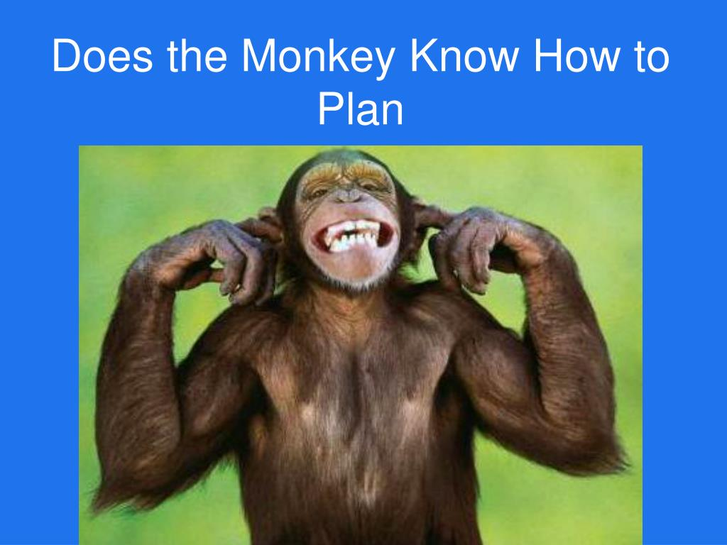 Does the Monkey Know How to Plan