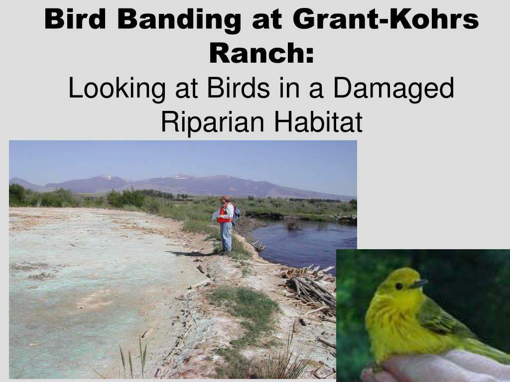 Bird Banding at Grant-Kohrs Ranch: