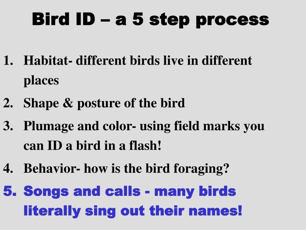 Bird ID – a 5 step process