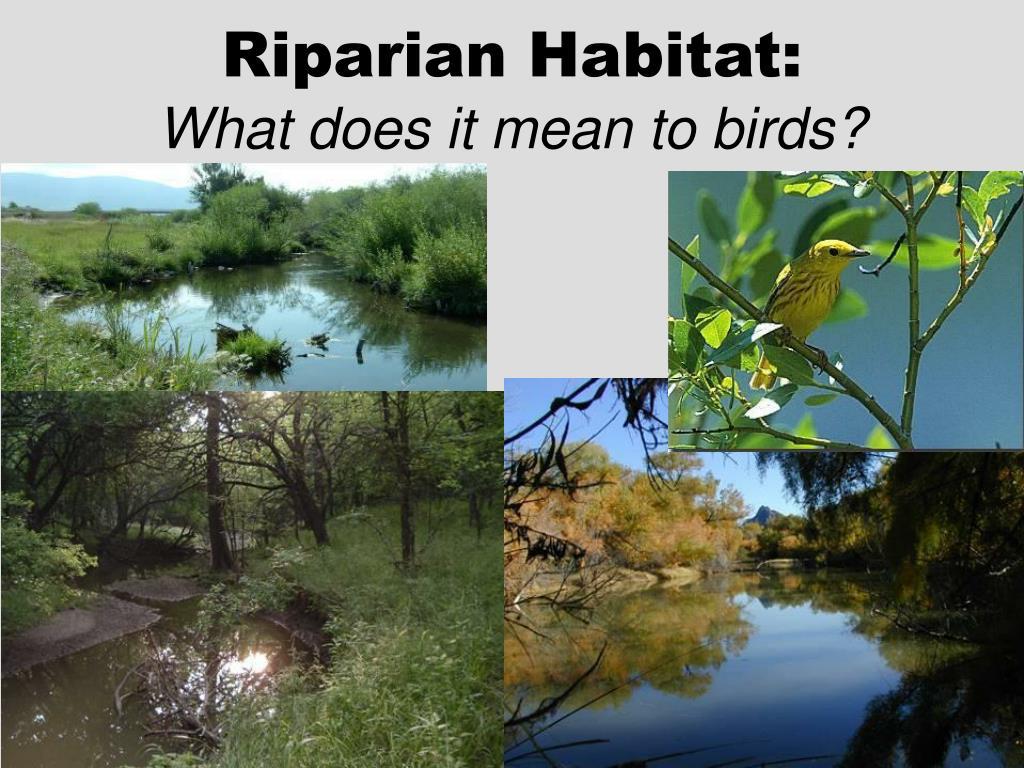 Riparian Habitat: