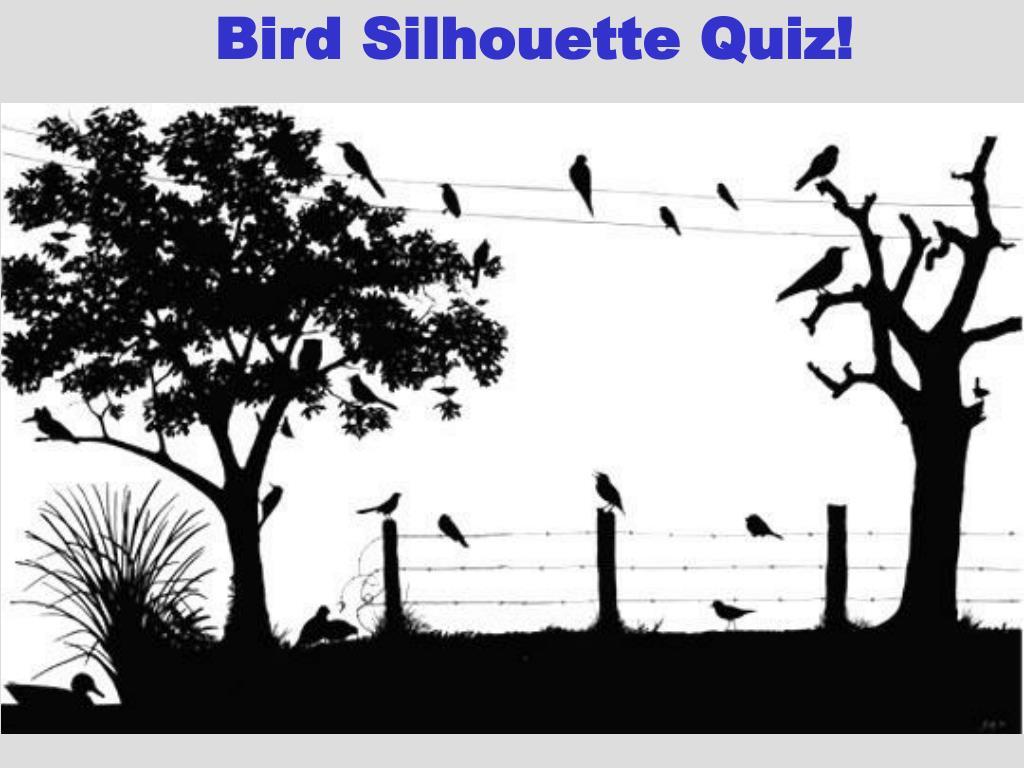 Bird Silhouette Quiz!