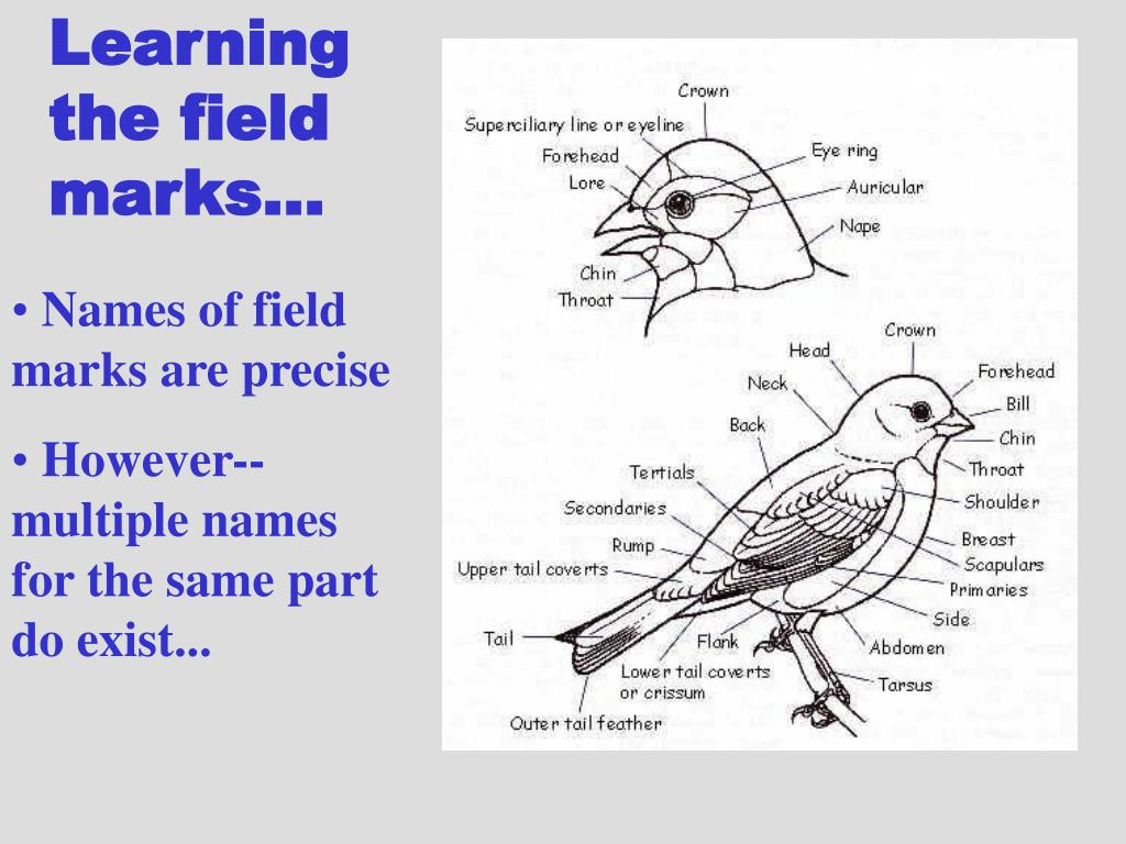 Learning the field marks...