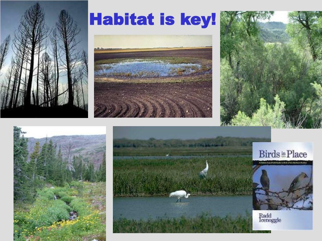 Habitat is key!