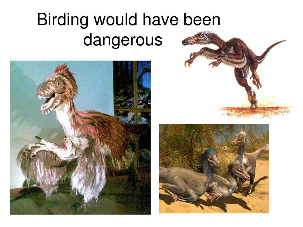 Birding would have been dangerous