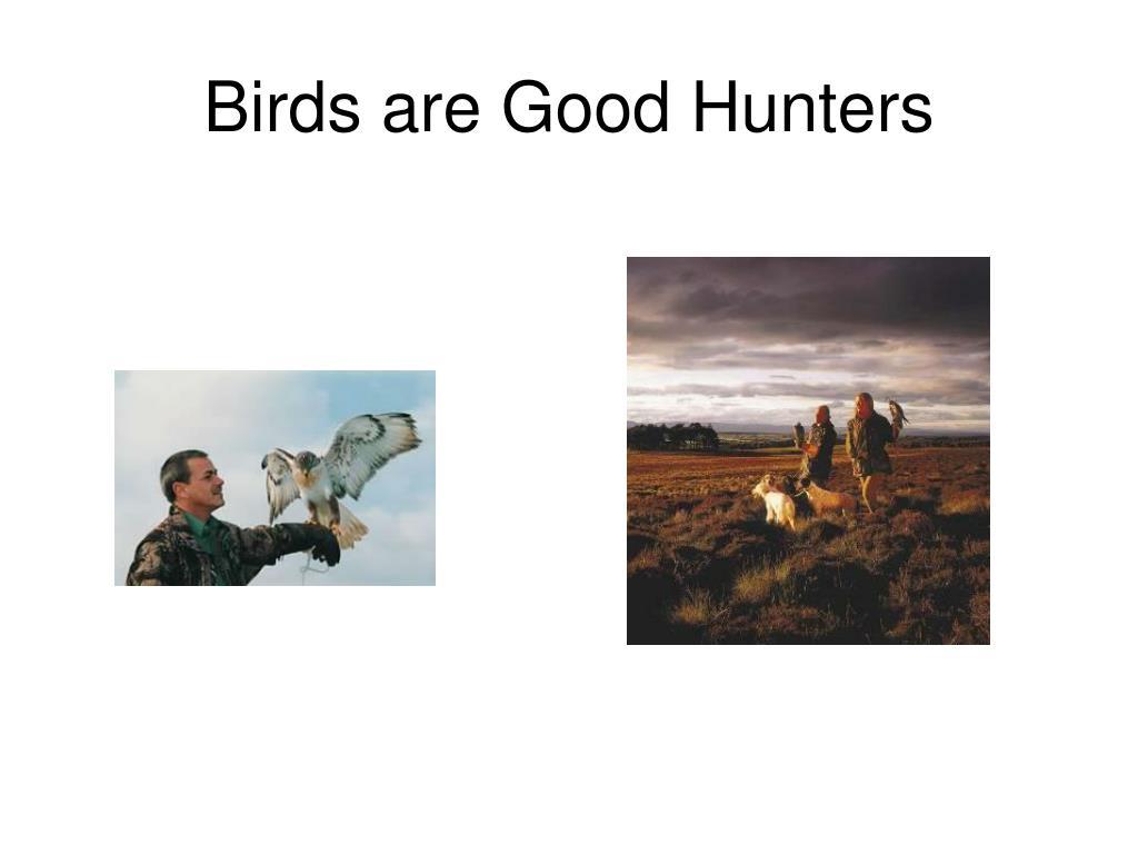 Birds are Good Hunters