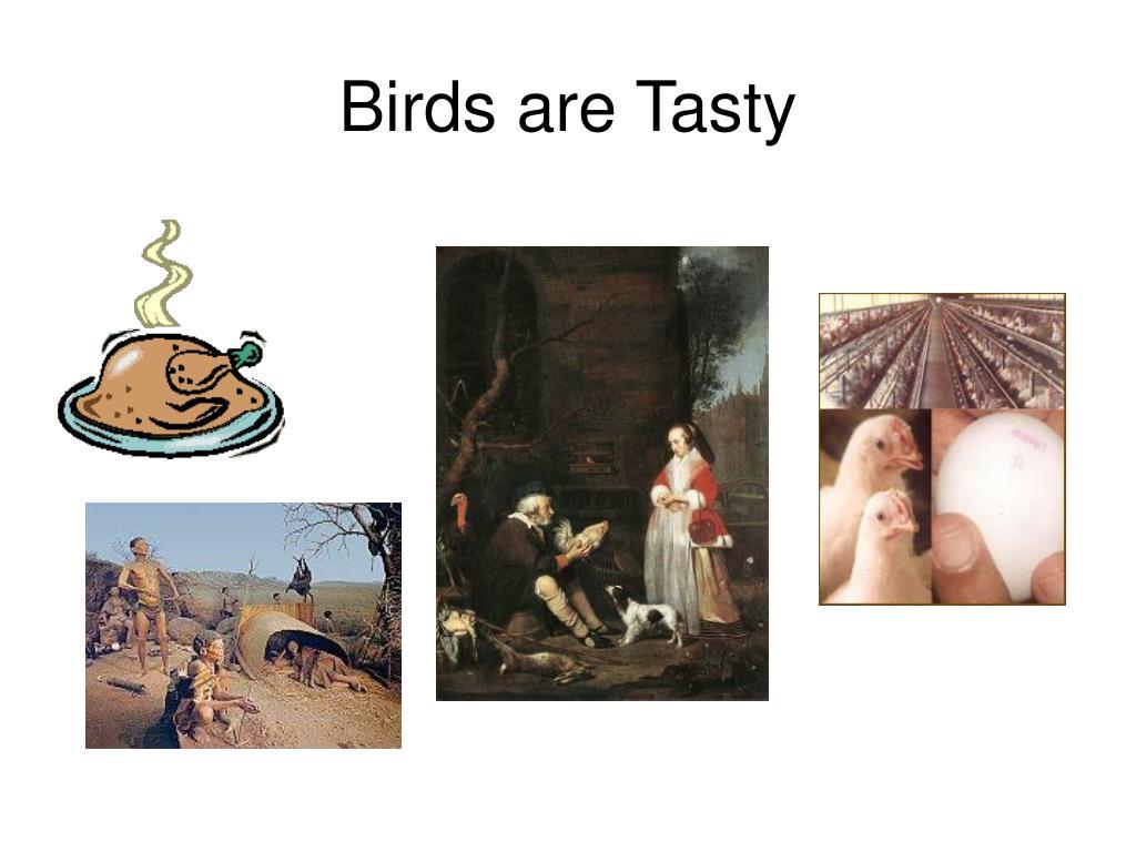 Birds are Tasty