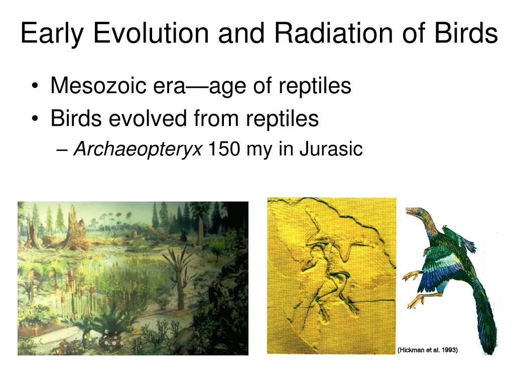 Early Evolution and Radiation of Birds