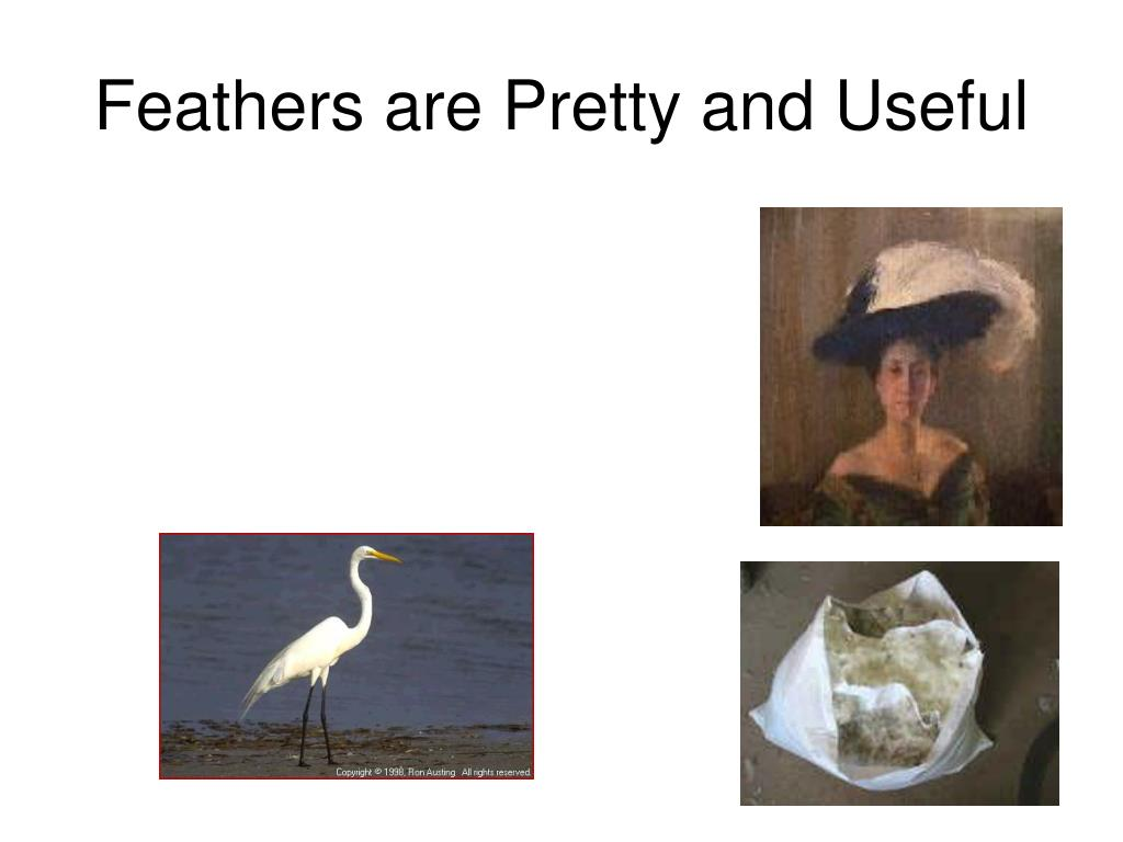 Feathers are Pretty and Useful