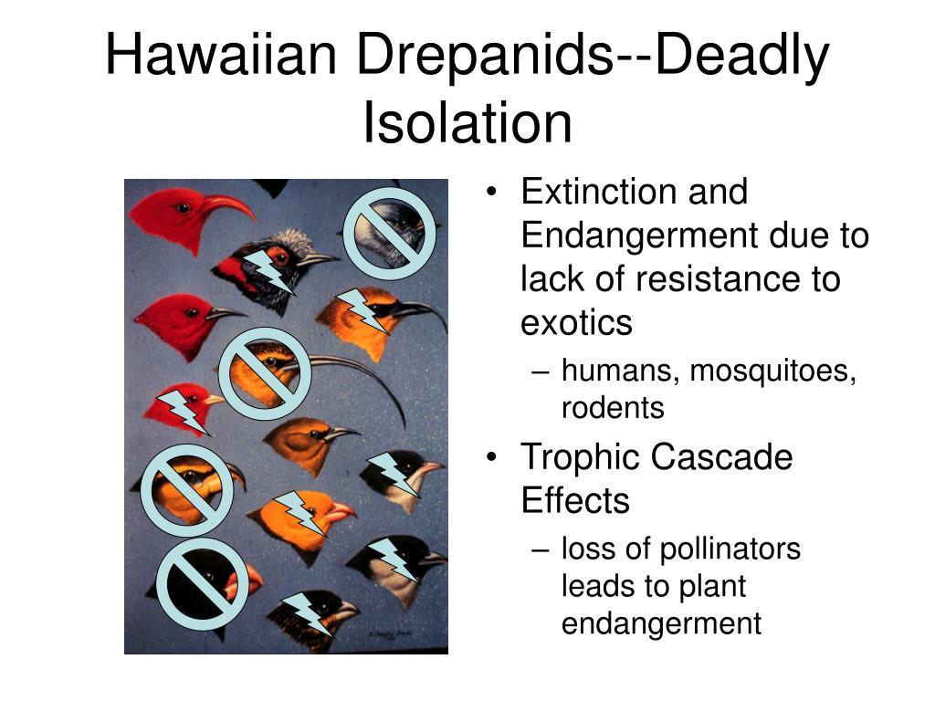 Hawaiian Drepanids--Deadly Isolation