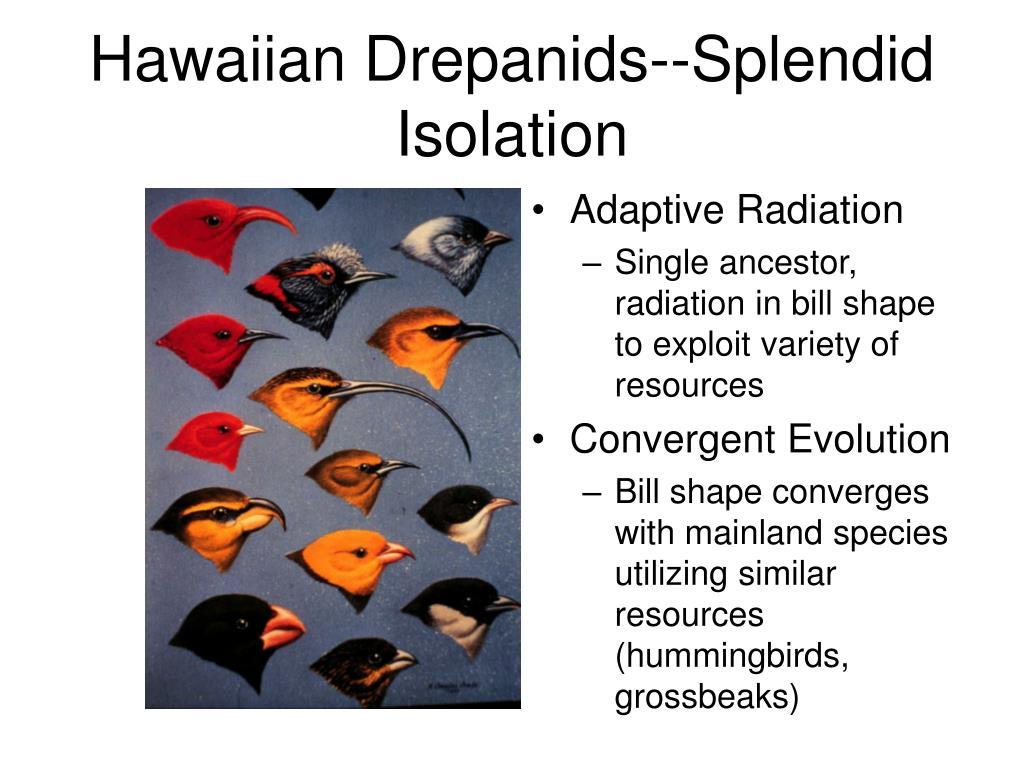 Hawaiian Drepanids--Splendid Isolation