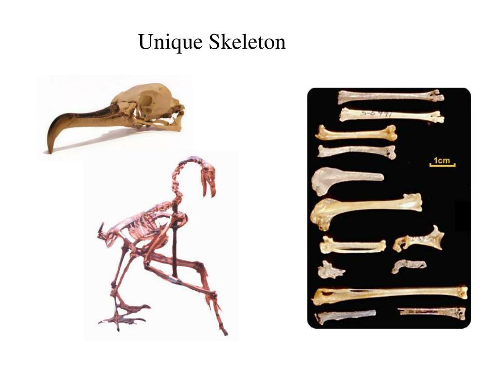 Unique Skeleton