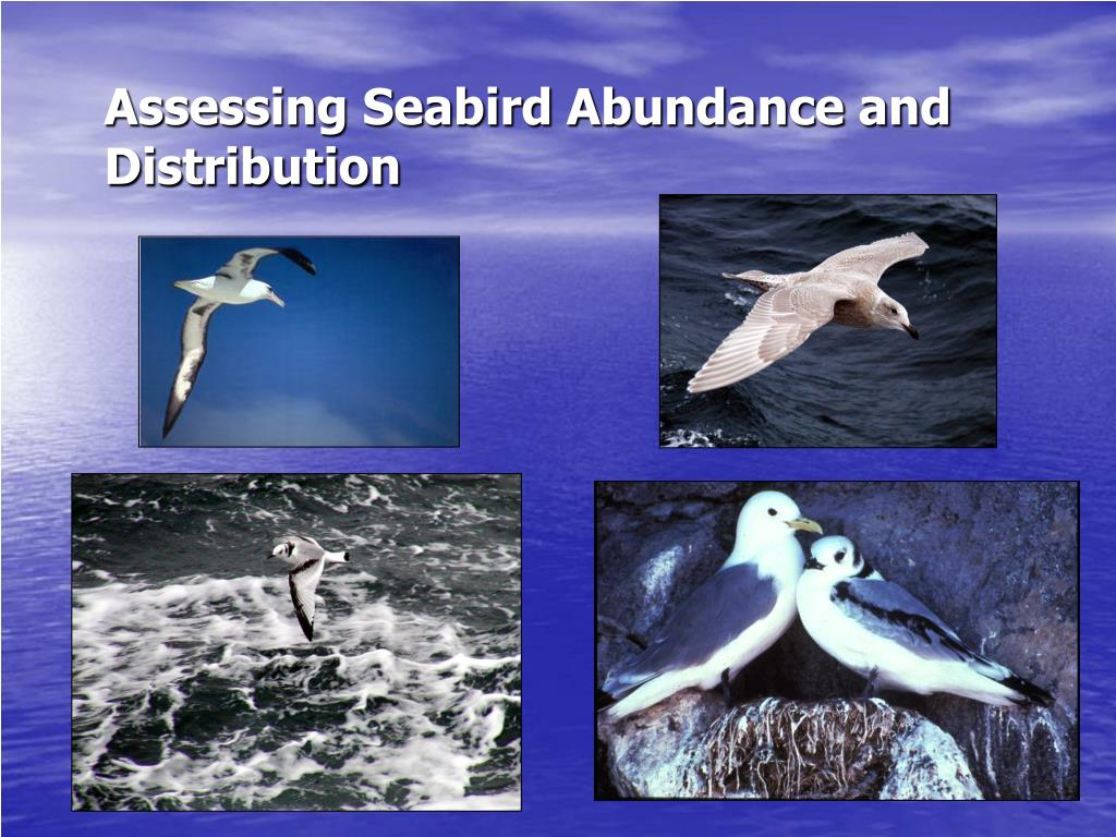Assessing Seabird Abundance and Distribution