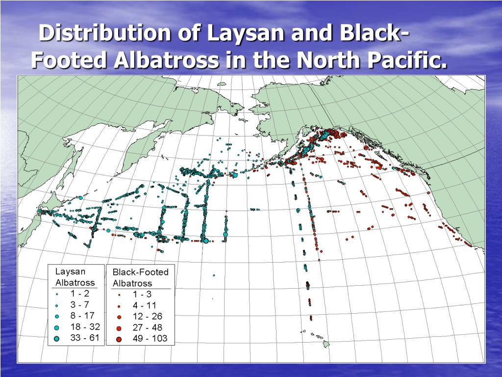 Distribution of Laysan and Black-Footed Albatross in the North Pacific.