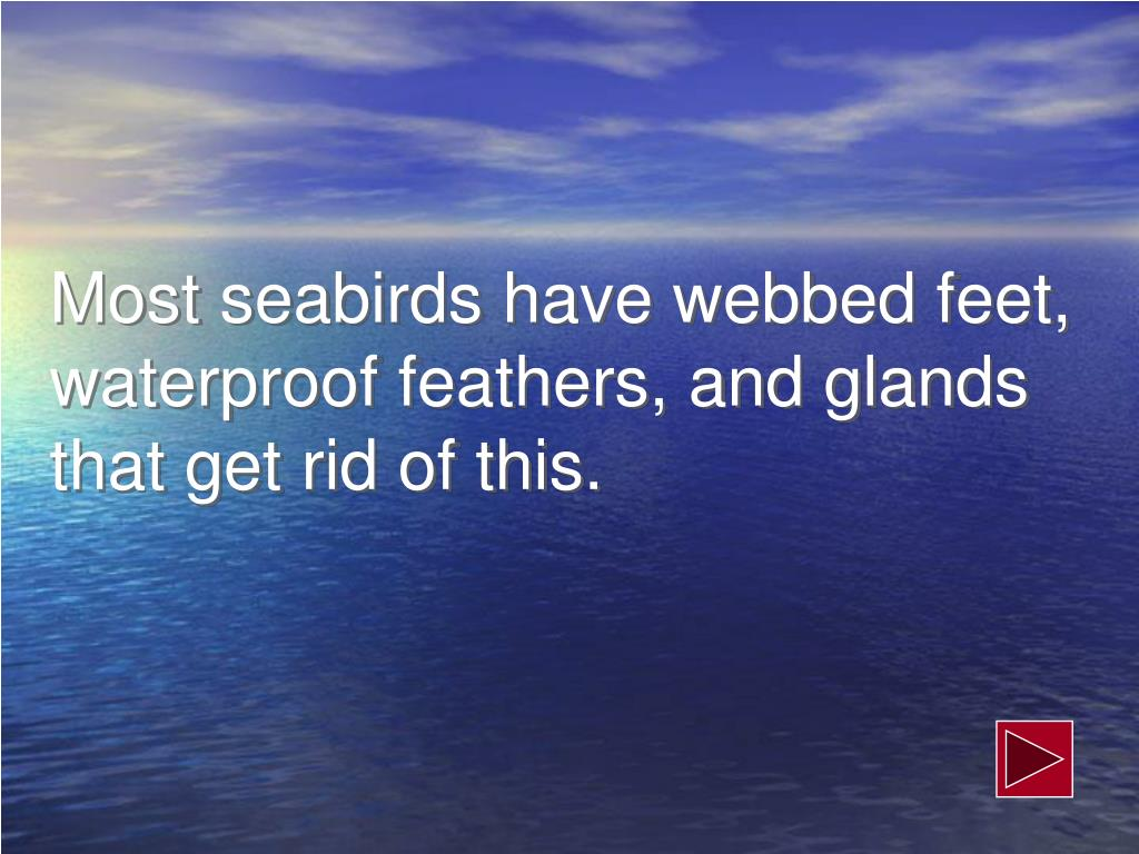 Most seabirds have webbed feet, waterproof feathers, and glands that get rid of this.