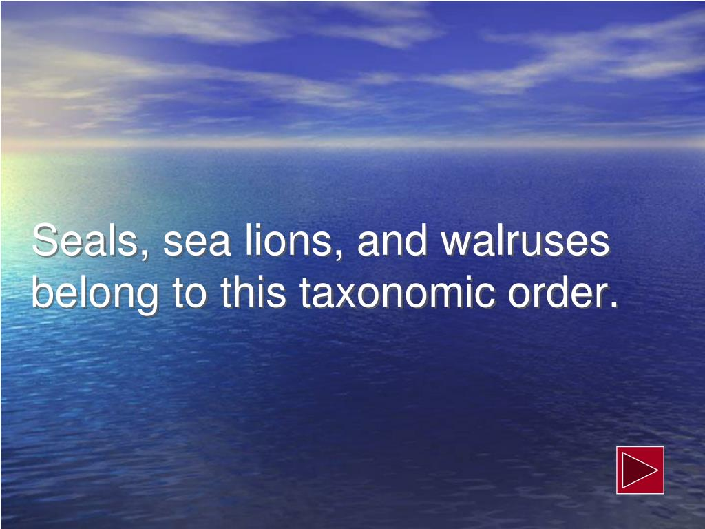 Seals, sea lions, and walruses belong to this taxonomic order.