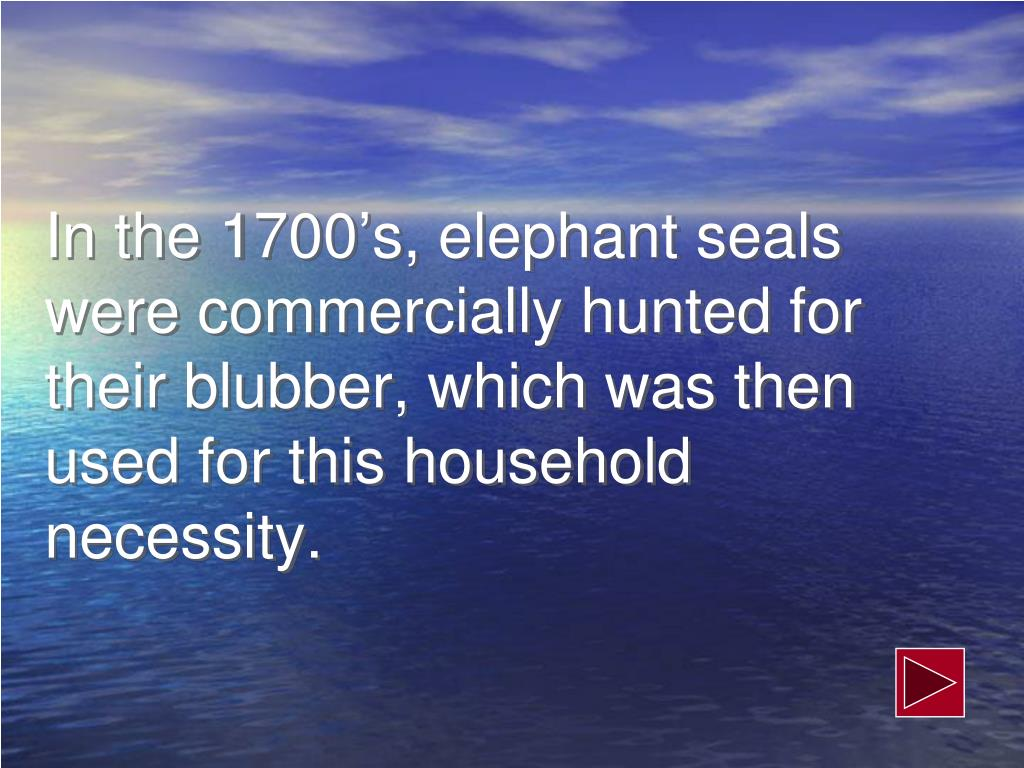 In the 1700's, elephant seals were commercially hunted for their blubber, which was then used for this household necessity.