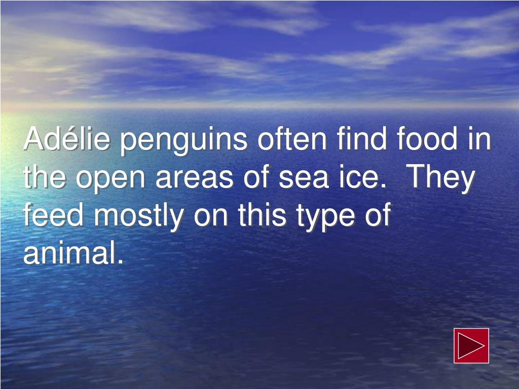 Adélie penguins often find food in the open areas of sea ice.  They feed mostly on this type of animal.