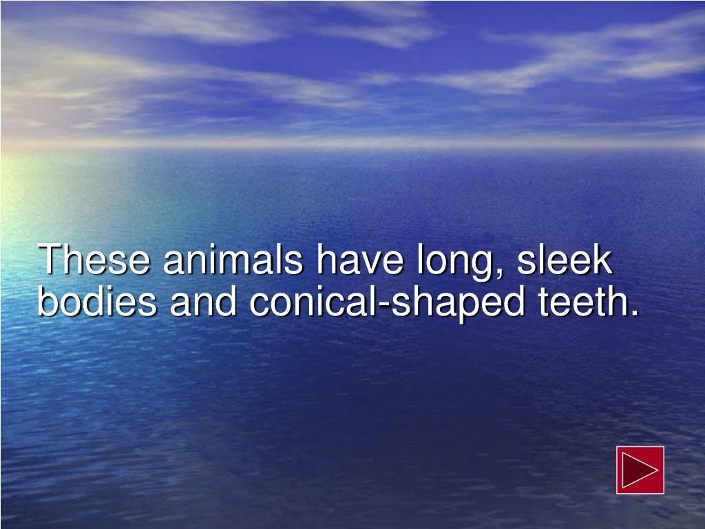 These animals have long, sleek bodies and conical-shaped teeth.
