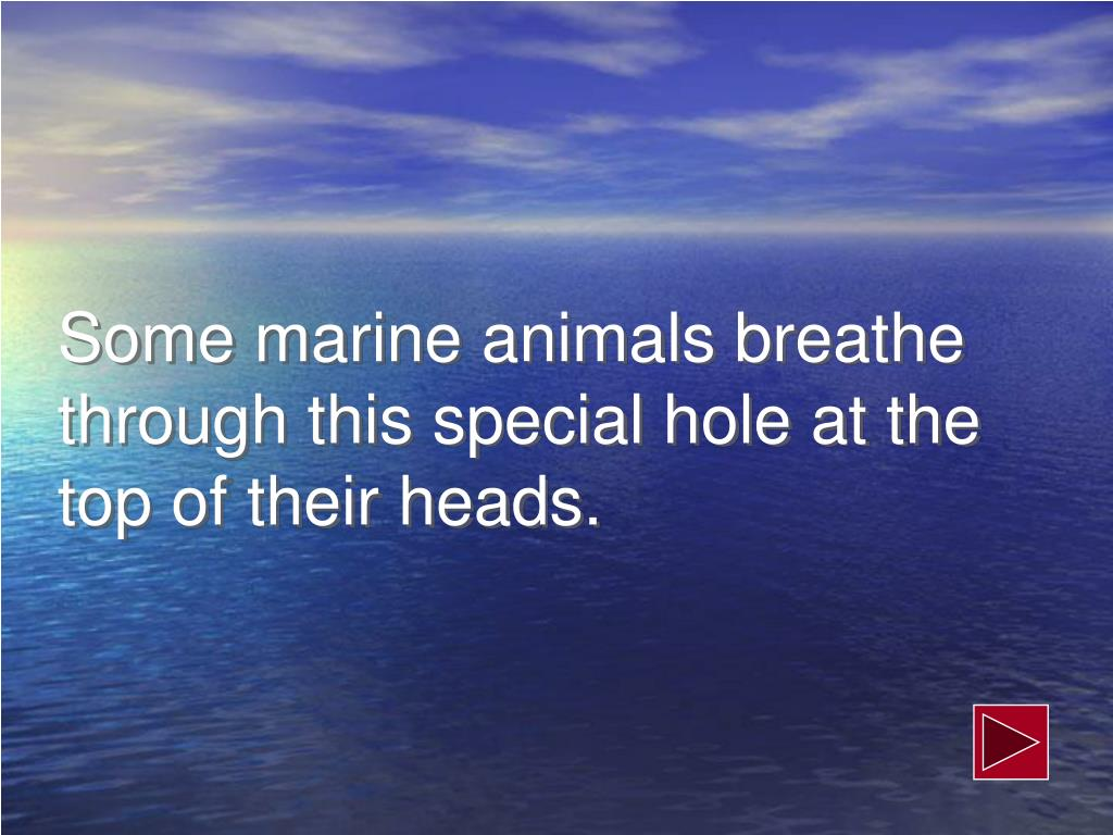 Some marine animals breathe through this special hole at the top of their heads.