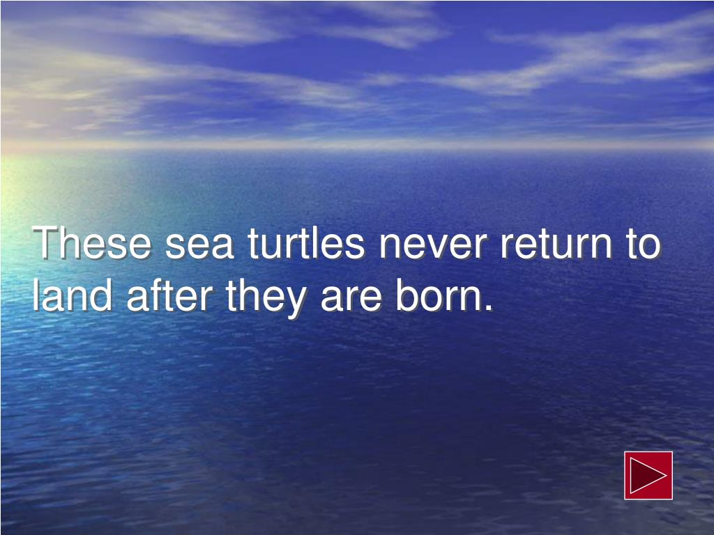 These sea turtles never return to land after they are born.