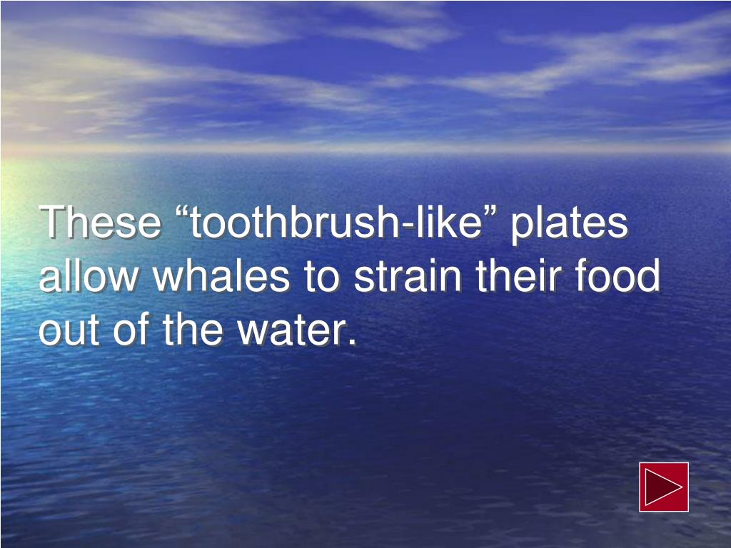 "These ""toothbrush-like"" plates allow whales to strain their food out of the water."