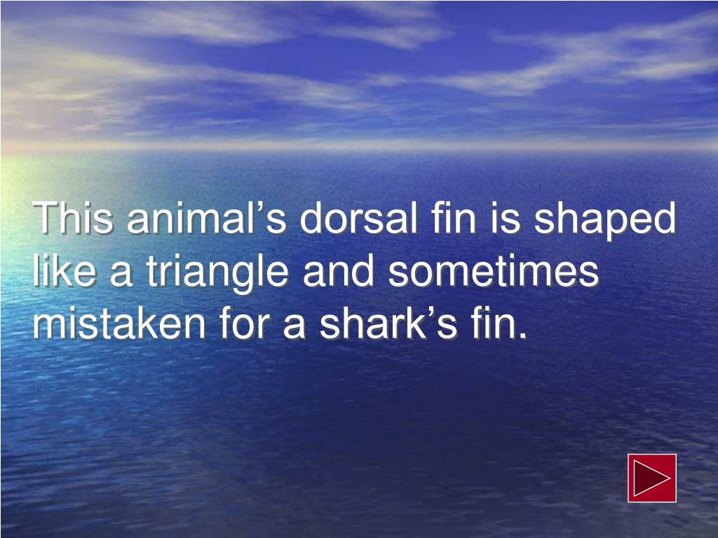 This animal's dorsal fin is shaped like a triangle and sometimes mistaken for