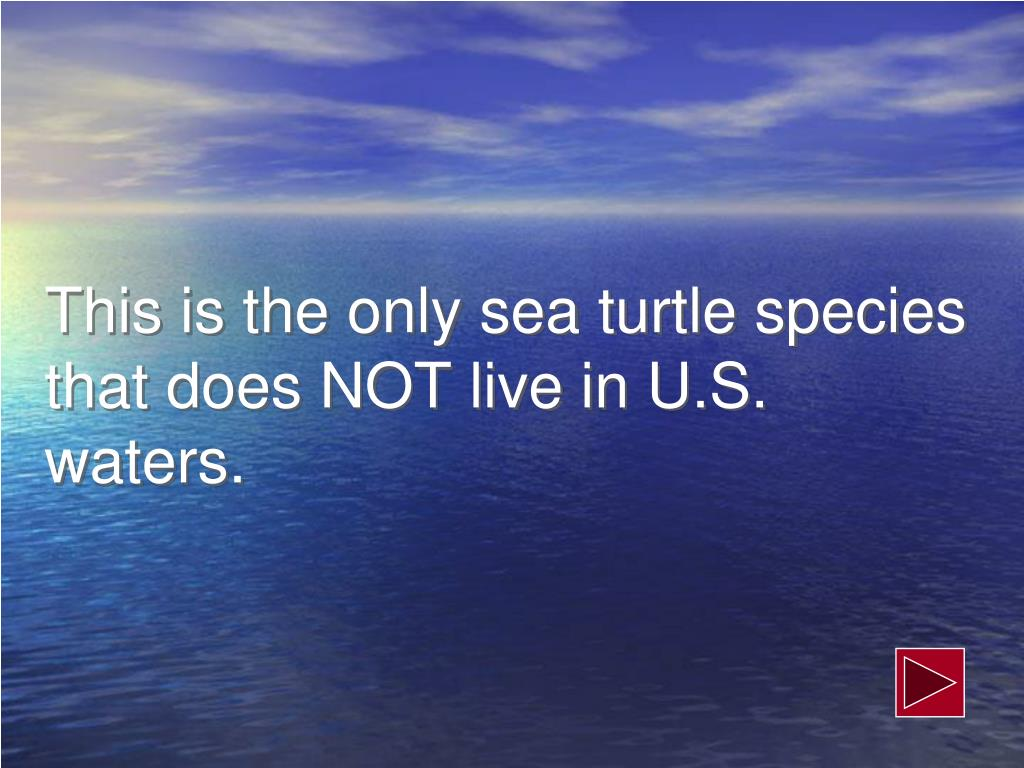 This is the only sea turtle species that does NOT live in U.S. waters.
